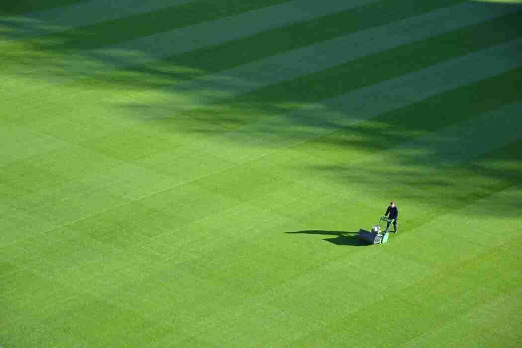 lawn mower oil